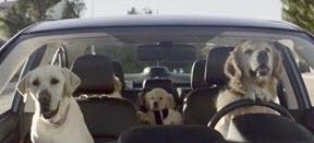 hondenbench auto