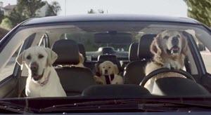 honden bench in de auto?